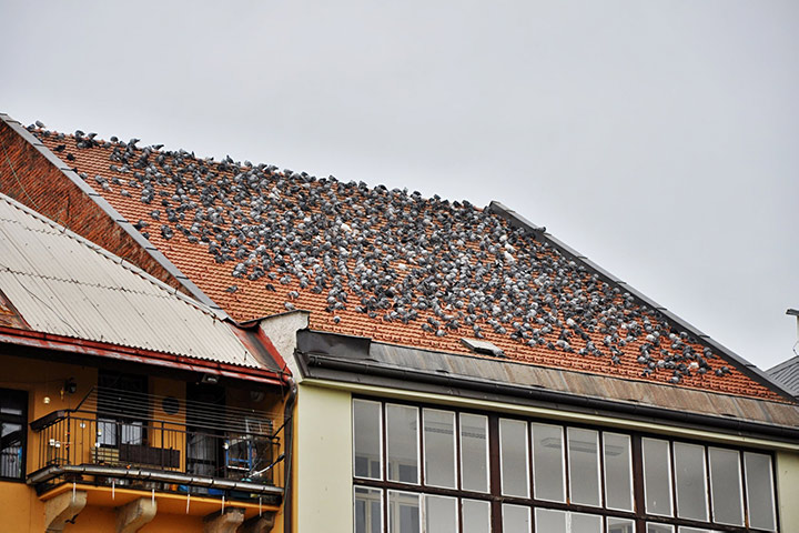 A2B Pest Control are able to install spikes to deter birds from roofs in Colindale.