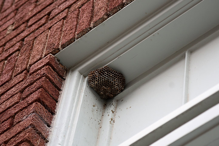We provide a wasp nest removal service for domestic and commercial properties in Colindale.
